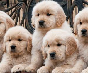 可爱的承担——在美国养狗全攻略