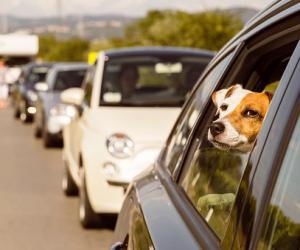 国外各国对宠物的法律政策