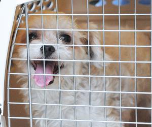 宠物安全 (PetSafe) 旅行指南