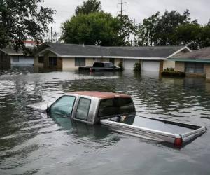 美国飓风哈维下的宠物营救和安置