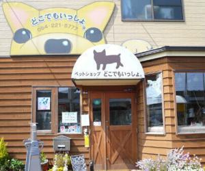 日本宠物行业面面观