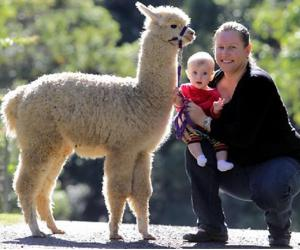 调查:澳洲,一个为宠物疯狂的国度