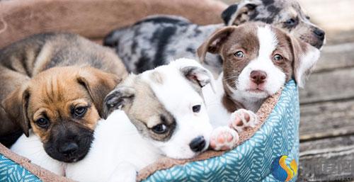 从奥兰多全球宠物展来看2017全球宠物产业趋势