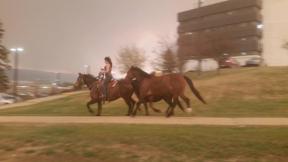 有人拍到甚至有飼主騎著自己的寵物馬逃難的景象!   翻攝自The dodo