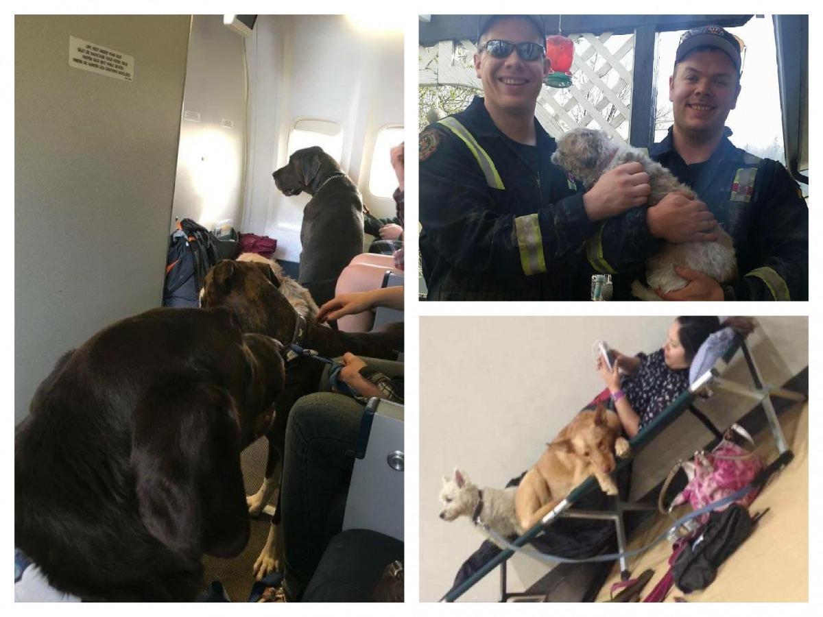 大火發生後有許多飼主除了寵物之外都沒有帶上家當,而消防隊在撲滅火勢時也順利救出許多受困的寵物。   取自網路