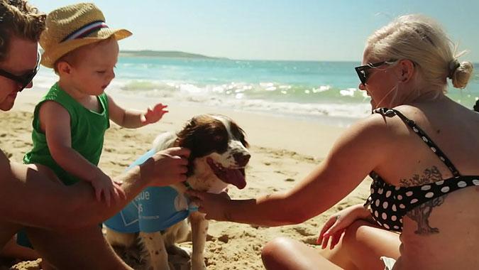 澳大利亚宠物消费地位到底有多重要?