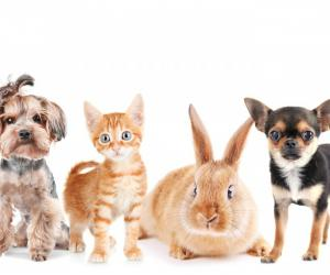 PIAA澳大利亚宠物大数据统计