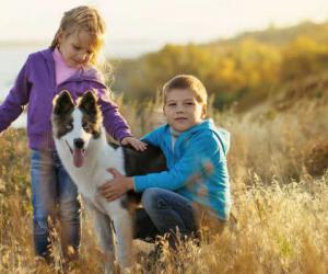 让狗和儿童安全地生活在一起