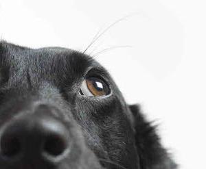 狗做鬼脸让我们爱它们