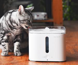 """""""泡沫""""OR""""刚需"""",哪个是宠物智能设备的未来?"""