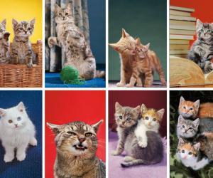 """摄影师沃特尔·卡代哈,专注拍猫70余年的""""教父"""""""