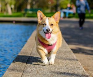 大型研究发现宠物主人是不同的