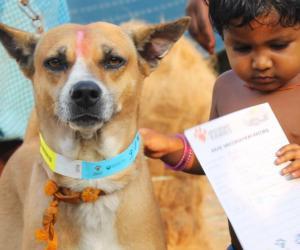 到2030年消除狗介导狂犬病的新全球战略计划