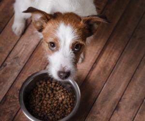 宠物食品蛋白质的5大原则